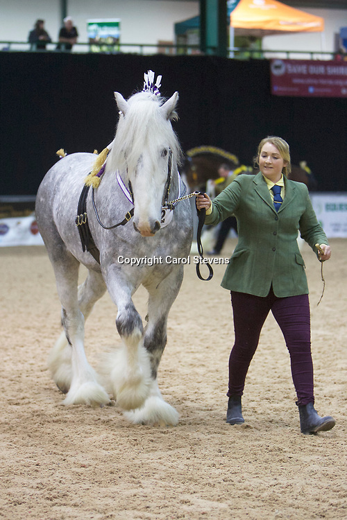 Mr B Lowrie's WITHENS STORMING NORMAN  <br />