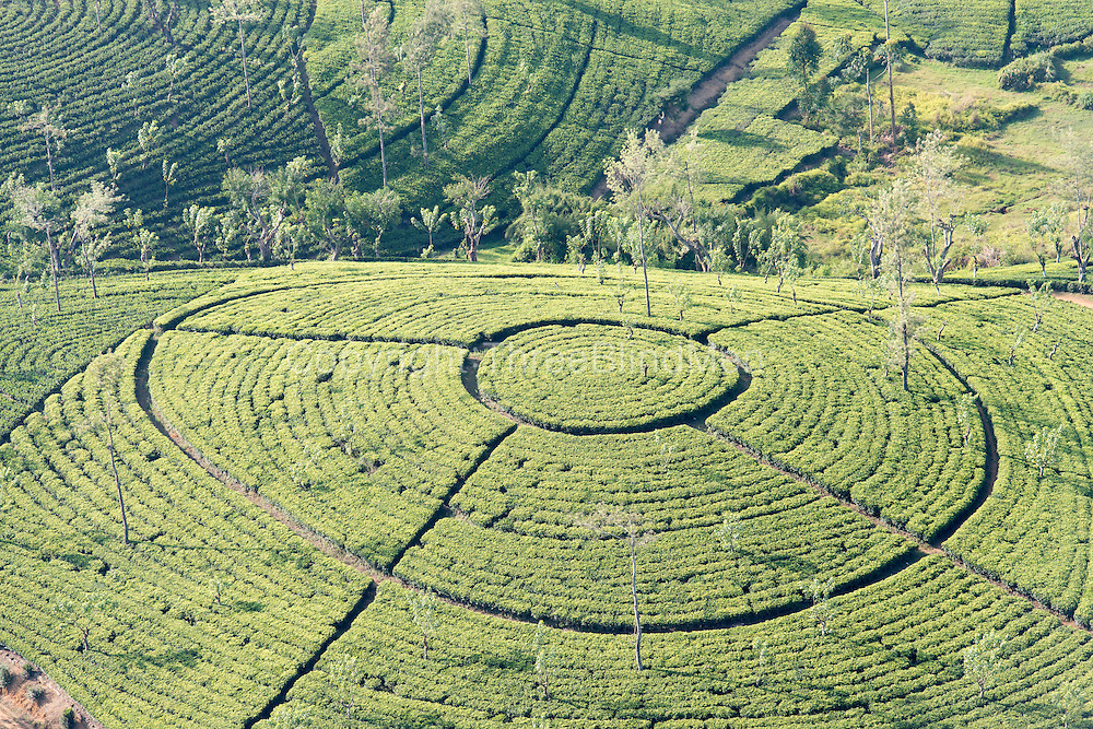 Sri Lanka. Tea estate from the air.
