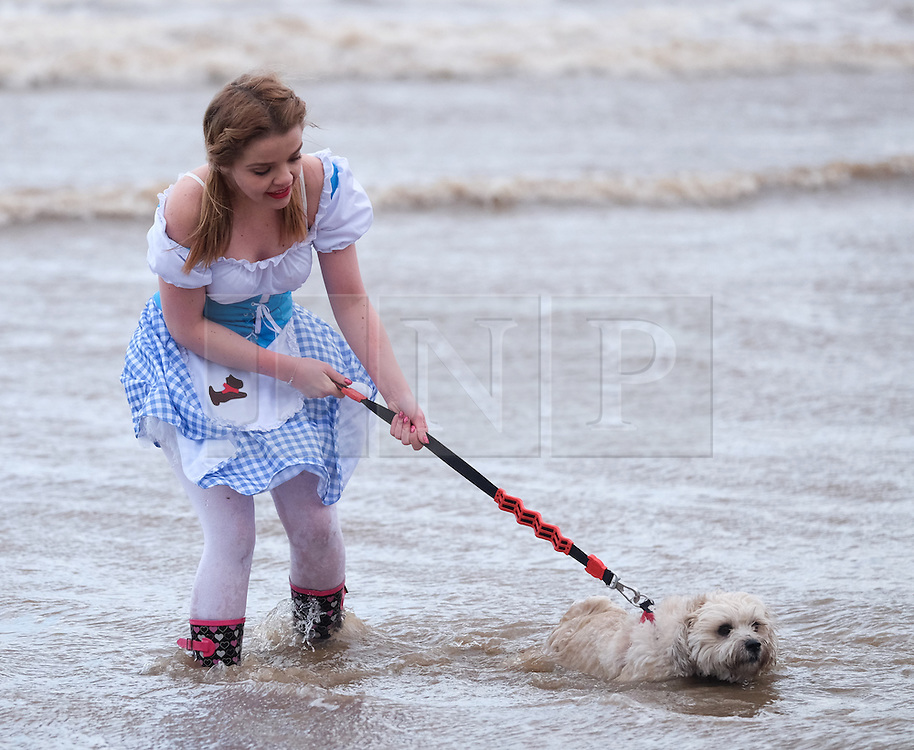 © Licensed to London News Pictures. <br /> 01/01/2017. <br /> Saltburn by the Sea, UK.  <br /> <br /> A girl and her dog join a small but hardy bunch of people running into the cold waters of the North sea as they take part in the annual New Year Day dip at Saltburn beach.<br /> <br /> The event helps to raise money for the Saltburn Animal Rescue Association.<br /> <br /> Photo credit: Ian Forsyth/LNP
