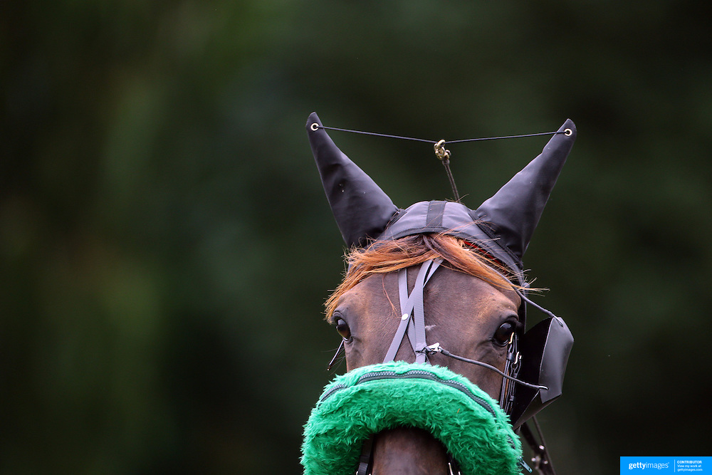 A horse with head gear during the Winton Harness Racing Club Race meeting at the Central Southland Raceway, WInton, Southland, New Zealand. 10th February 2012. Photo Tim Clayton