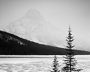 Mount Chephren and Pines