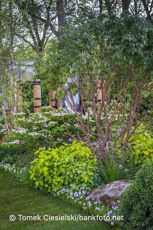 The Brewin Dolphin Garden - Chelsea Flower Show 2014