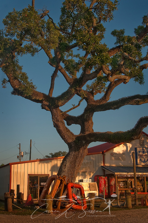 A live oak stands in front of Marshall Marine Supply in Bayou La Batre, Ala., July 3, 2010. (Photo by Carmen K. Sisson/Cloudybright)