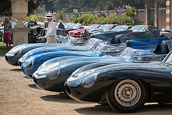 © Licensed to London News Pictures. 02/09/2017. London, UK. A visitor to the Concours of Elegance show admires a line up of classic Jaguar D-Type sports cars on display in the grounds of Hampton Court Palace. The Concours of Elegance brings together, over three days, a selection of 60 of the rarest cars from around the world some of which have never been seen before in the UK. Each car owner is asked to vote on the other models on display to decide which car is considered to be the 'Best of Show'. The show also displays of hundreds of other fine motor cars, including entrants to The Club Trophy. Photo credit: Peter Macdiarmid/LNP