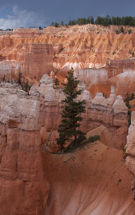 Lone tree among the hoodoos in Bryce Canyon National Park