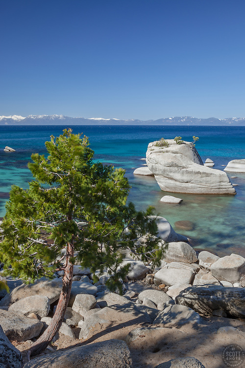 """""""Tree at Bonsai Rock 1"""" - Photograph of a tree in front of the famous Bonsai Rock along the East shore of Lake Tahoe."""