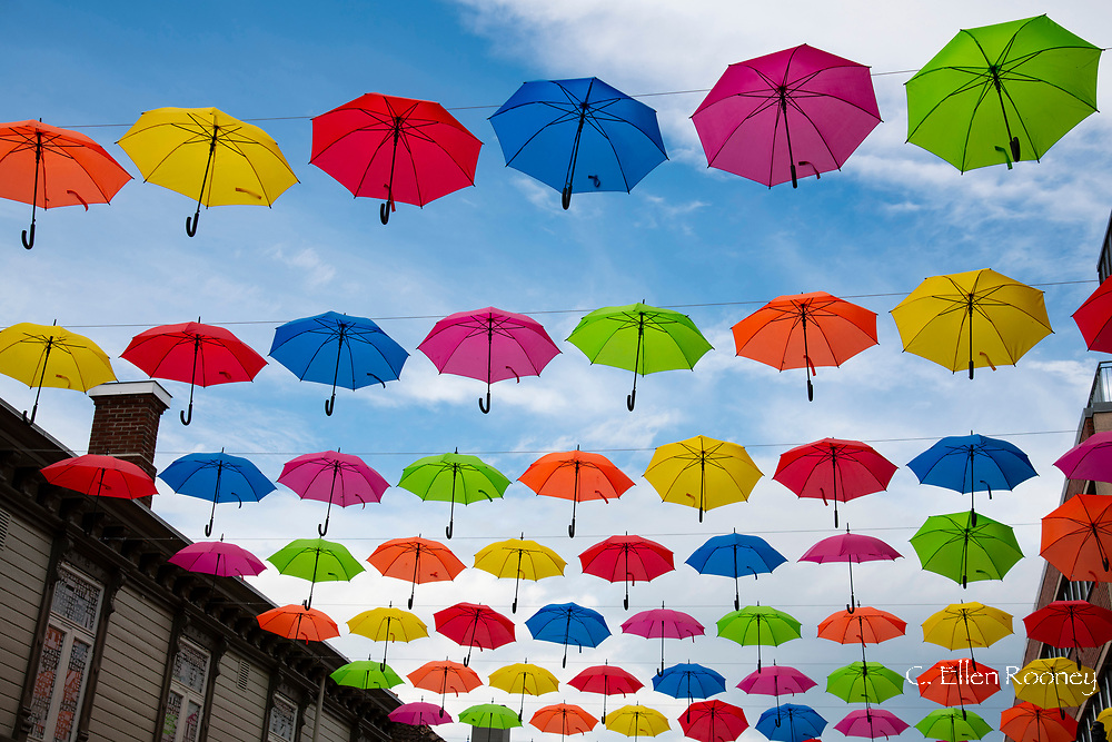 An installation of colourful umbrellas above a street in Trondheim, Trondelag, Norway, Europe