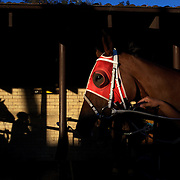 The late afternoon light shines on the stables during night horse racing at Canterbury race course, Sydney, Australia,  02 December 2009. Photo Tim Clayton