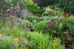 The hot border at Glebe Cottage with crocosmia, Ricinus communis, hedychiums, molinia and cotinus. Cobweb on fennel