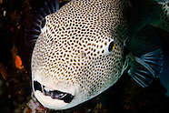 Underwater photos from Lombok, Indonesia