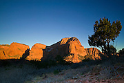 A pine tree frames the view of the Kolob Canyons at sunset in Zion National Park, Utah. The towering Shuntavi Butte is visible just below the tree. The Kolob Canyons are also known as finger canyons, with tall, narrow formations separated by narrow canyons.