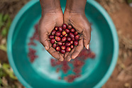 Rwanda-Relationship Coffee Institute