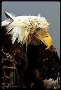 08: WILDLIFE LAB EAGLE REPOSITORY