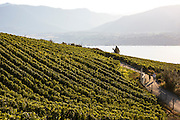 Wine touring by bike along the Kettle Valley Railway / Trans Canada Trail between Penticton and Naramata, British Columbia