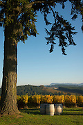 Soter Vineyards, Yamhill-Carlton, Willamette Valley, Oregon