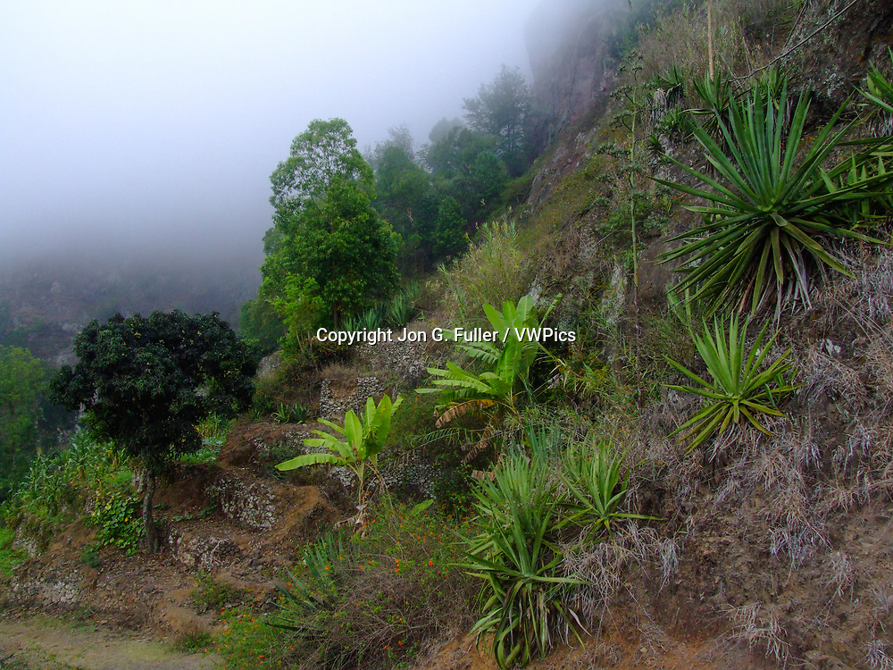 Stone terraces, banana plants and agaves on the steep hillside of the Paul Valley, Santo Antao, Republic of Cabo Verde, Africa.