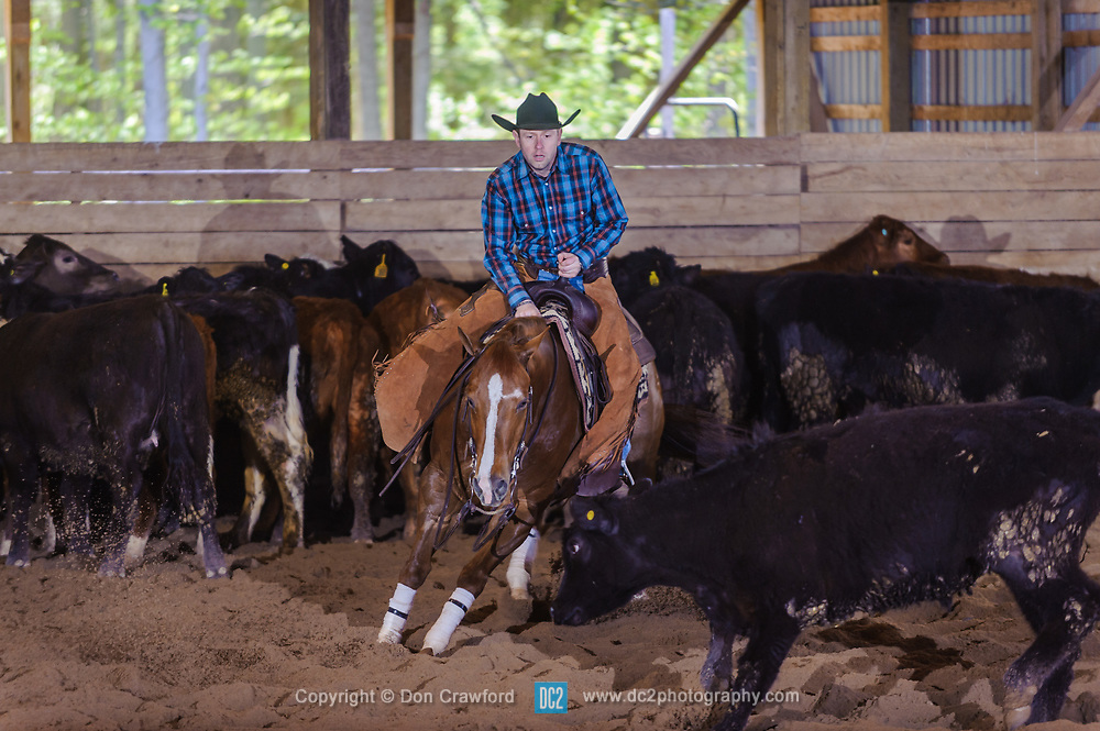 May 20, 2017 - Minshall Farm Cutting 3, held at Minshall Farms, Hillsburgh Ontario. The event was put on by the Ontario Cutting Horse Association. Riding in the Non-Pro Class is Eric Bouchard on The Reyl Slim Shady owned by the rider.