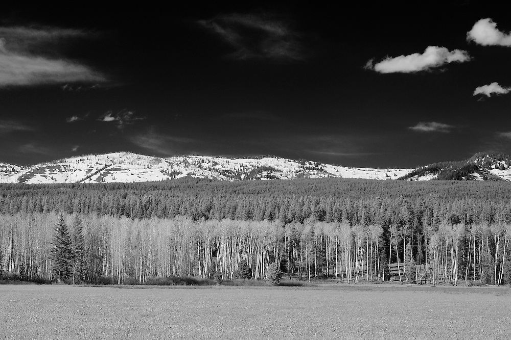 Meadow Aspen Grove - East Jackson Lake, WY - Infrared Black & White
