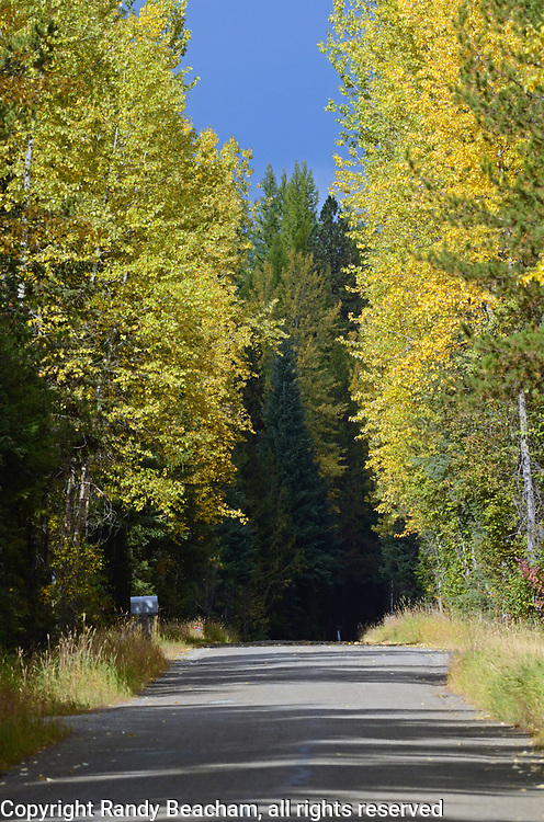 Colors of fall line the South Fork Yaak road on the last day of September2017. Yaak Valley in the Purcell Mountains, northwest Montana.