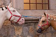 Horses being prepped for the Rojoneador bullfight at the Plaza de Toros in Morelia, Mexico.