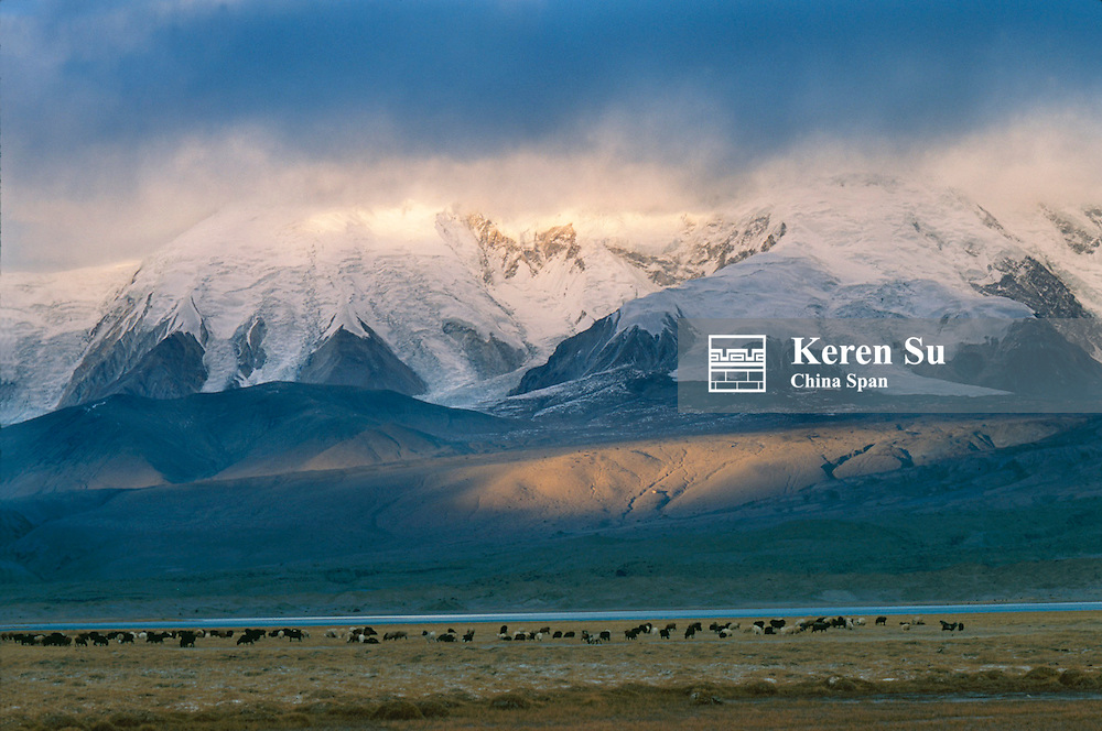 Sheep and yaks grazing on the grassland on the Pamir Plateau at sunset, snow-capped mountain behind, Xinjiang Province, Silk Road, China
