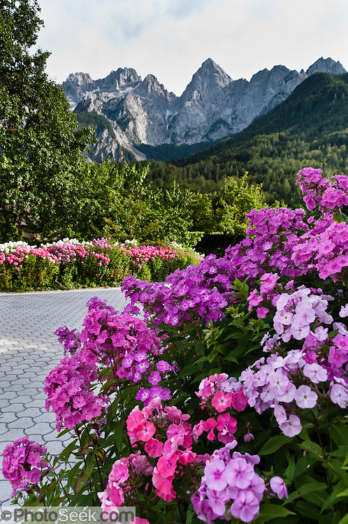 "Pink flowers bloom in a driveway beneath the Julian Alps, Slovenia, Europe. The pyramidal mountain peak of Spik (""Spike,"" 2472 meters/8110 feet) rises high above the town of Gozd Martuljek (""Martuljek Forest,"" formerly known as Rute) in the Julian Alps, in Kranjska Gora municipality in the Upper Carniola region, Slovenia. To the left (southeast) of Spik rises a higher summit, Oltar (2621 m), also within Triglav National Park (in Slovene: Triglavski narodni park, TNP). Historically, four linguistic and cultural groups of Europe have met in Slovenia: Slavic, Germanic, Romance, and Uralic. In 1991, Slovenia declared full sovereignty from Yugoslavia. In the 2002 census, 83% considered themselves Slovenes. Today, Slovenia is a member of the European Union, the Eurozone, the Schengen area, NATO and OECD. Per capita, Slovenia is the richest Slavic nation-state."