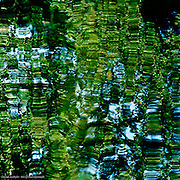 water, organic, leaves, nature, reflection, green, blue,