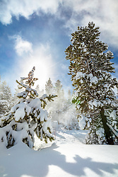 """Snowy Scene In Tahoe Donner 2"" - photograph of snow covered trees and a blue sky near Alder Creek in the Tahoe Donner are of Truckee, California."