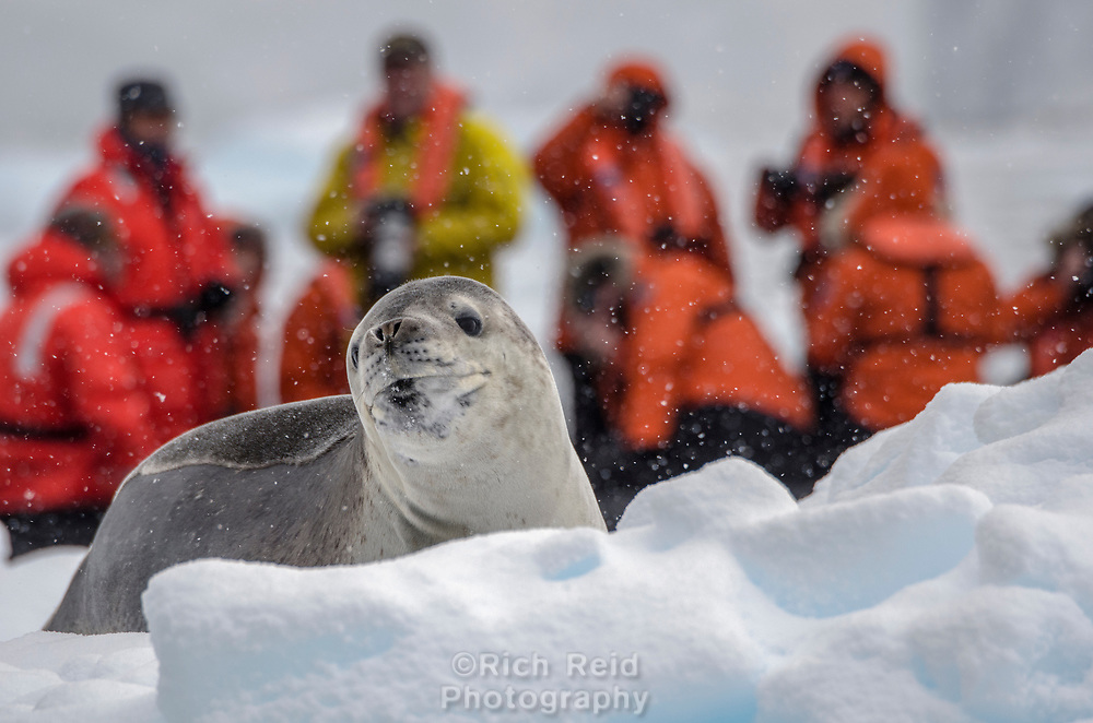 Guests photographing a leopard seal on an iceberg in Bul's Bay, Antarctica.