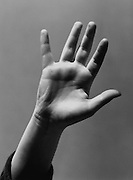 Raised hand showing palm and five fingers