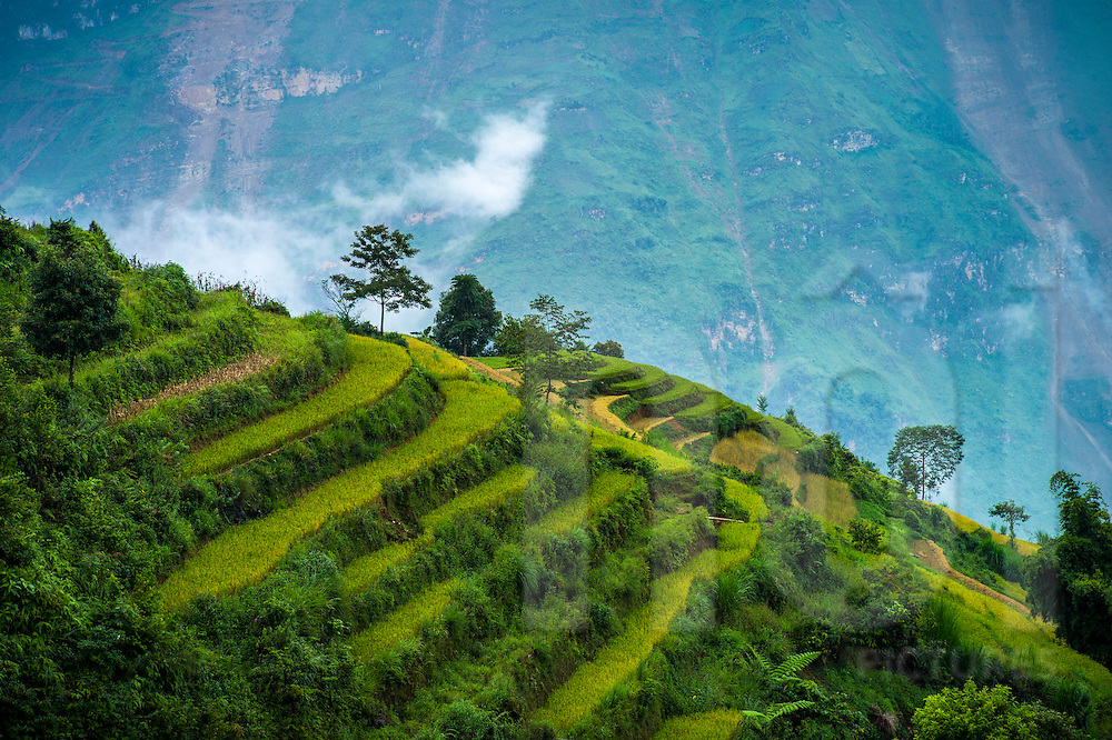 Agrarian landscape along the road between Bac Ha and Coc Pai (Xin Man), Vietnam, Southeast Asia