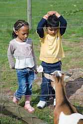 Children looking at a goat on a visit to a city farm,