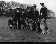 New Garda Dogs.   (N2)..1979..22.11.1979..11.22.1979..22nd November 1979..Today saw the passing out of four new Garda Dogs for the Garda Canine unit.The event was held at the Royal Hospital, Kilmainham..Image shows the commissioner welcoming the new recruits into the Garda force (L-R).Sergeant Brendan Maher,Wexford who is in charge of the canine unit, Garda Pat Griffin, Tralee,Co Kerry with 'Sam', Garda Vincent Turner, Limerick with 'Glenn',Garda John Culkin, Ballina,Co Mayo with 'Rover'and Garda Thomas Donnelly,Raheny, Dublin with Duke.
