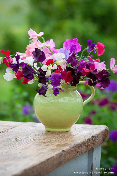 Mixed sweet pea flower arrangement in green jug. Lathyrus odoratus