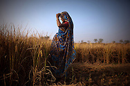 Manju Devi, who is eight months pregnant with her second child, takes a break from cutting rice stalks on her family's land in the village of Silonja in the state of Bihar, India.  Most women in this region are expected to keep up with their standard workloads throughout their entire pregnancies.