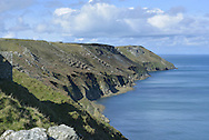 East side of Lundy showing cleared Rhododendron thickets, Devon.