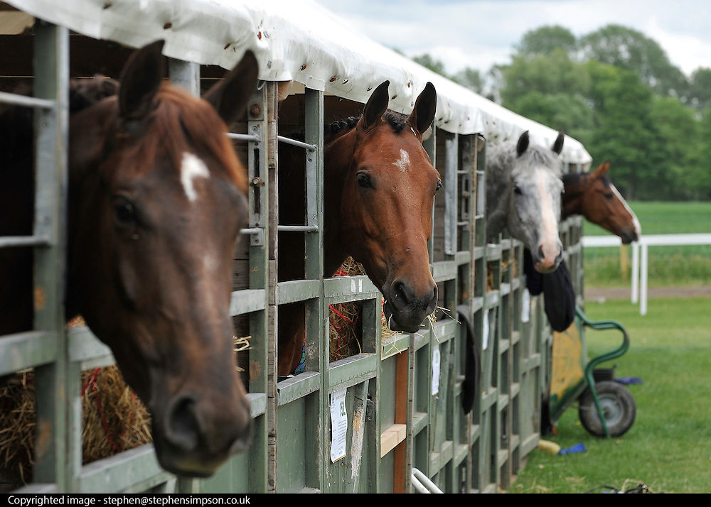 © under license to London News Pictures. LONDON, UK  11/05/2011. Horses wait in the stables. The first day of The Royal Windsor Horse Show in the private grounds of Windsor Castle today (11 May 2011). Photo credit should read Stephen Simpson/LNP.