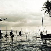 Hidden away in a small community on the southernmost point of the island nation of Sri Lanka resides a group of a few hundred men with a highly specialized method for catching fish. They are called stilt (or stick) fishermen, and they have been perfecting this craft for generations. Stilt fishermen are some of the poorest people on the island. Even the simple bamboo sticks they use as fishing rods are handed down from father to son. They spend their days precariously perched above the ocean on a wooden pole that has been anchored into the reef. With one hand they dangle their bamboo rods over the water, with the other they hold themselves up. No bait is used, but they are quite adept at catching the surprisingly small reef fish they are after. Stick fishing arose from neccesity. An unobtrusive method for harvesting the reef, that would not cause the fish to flee the reef entirely was needed. So they float above, catching the fish as if it was were a bird plucking its prey from the sea. For hours on end he will sit with great agility on his stilt, catching small fish and placing them in his bag. An entires day catch will hopefully be enough to fill all the mouths that need feeding. Sri Lankan Stick fishermen face an uncertain future. Stilt fishing was almost cast to the history books after the 2004 tsunami decimated the coastal areas of Sri Lanka. A civil war raged here for decades, and ended in just 2009. Now the country can begin to rebuild. It remains to be seen if there will be a place for these unique people in the years to come. The innevitable development of coastline property may leave them with nowhere to continue their craft.