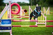 Sunday 7th July 2019, Dorset, England. Krazy K9s Fun Day, Longburton, Dorset, England on Sunday 7th July 2019<br /> <br /> PHOTOGRAPH BY AND COPYRIGHT OF Simon de Trey-White<br /> <br /> email: simon@simondetreywhite.com<br /> photographer in England +44 7484 864398