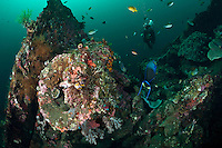 Tulamben is located on Bali's NE coast and has become very popular with divers and photographers.  The area is famous for the wreck of the USAT Liberty Glo, a WWII era ship that lies just off the beach in Tulamben village.  The areas is also very well known for its high marine biodiversity. Bali is a very popular holiday destination for divers and offers a wide variety of different types of diving, from reefs and wrecks to mucks sites such as Puri Jati and Gilimanuk.