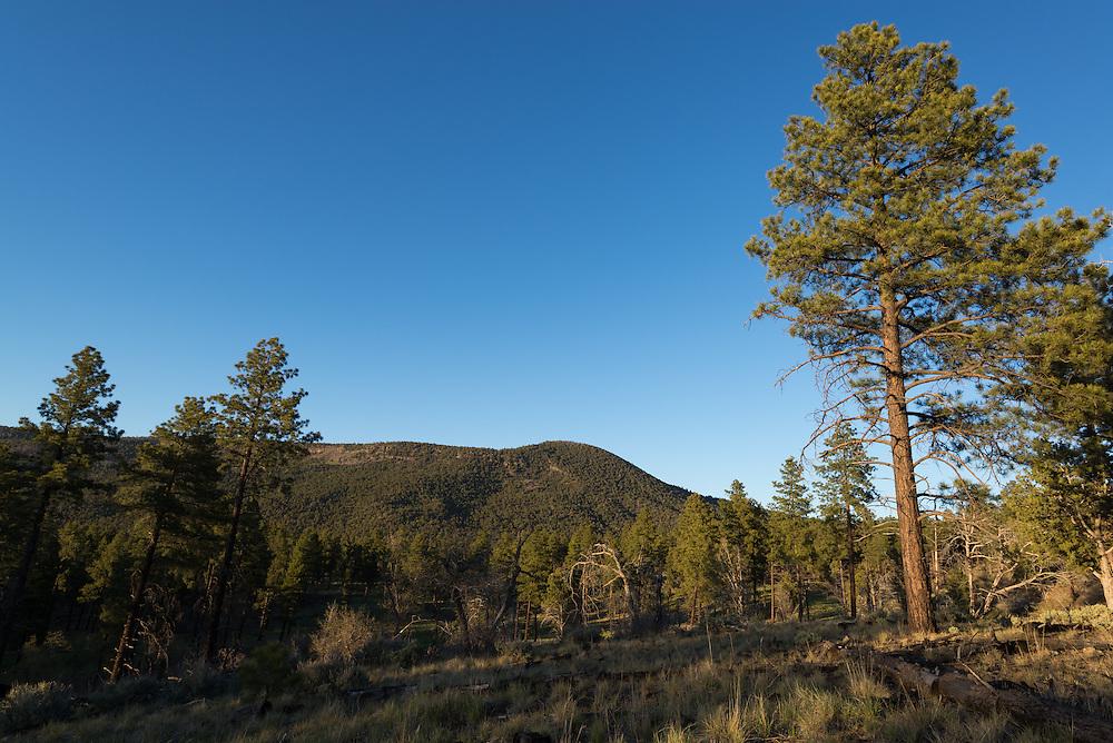 Ponderosa pine forest and Mt. Trumbull, Northern Arizona.