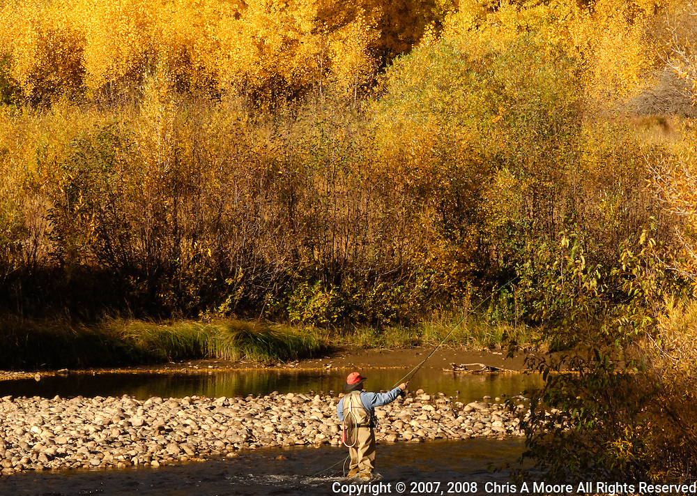 Fly Fisherman, Cache la Poudre River, Colorado