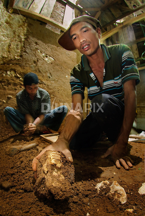 "Lead Manggarai excavator Benyamin Tarus recovers a Stegodon jaw from Liang Bua cave, discovery site of the Flores ""hobbit"", Homo floresiensis."
