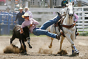 061811-Evergreen, COLORADO-evergreenrodeo-Troy Brandemuehl, of Laramie, WY, wrestles a steer during the Evergreen Rodeo Saturday, June 18, 2011 at the El Pinal Rodeo Grounds..Photo By Matthew Jonas/Evergreen Newspapers/Photo Editor