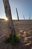 Ghost Forest at Sleeping Bear Dunes