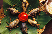 "Giant water bugs, (Lethocerus indicus) deep-fried in batter. Served as an appetizer at the Kan Ron Ban Suan Restaurant in Chiang Mai, Thailand. The owner and chef is Mrs. Bang-orn. She says, ""Dip live water bugs in tempura batter and fry in medium vegetable oil until it turns golden and serve hot in sweet plum sauce. Appetizer or main course. For main course serve with sticky rice and chili sauce (Nam Prik)."".Image from the book project Man Eating Bugs: The Art and Science of Eating Insects."