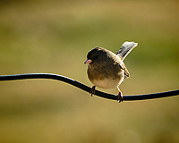 Small bird. Image taken with a Fuji X-T3 camera and 200 mm f/2 lens with 1.4x TC