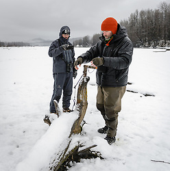 Steve Lewis, Raptor Management Coordinator, U.S. Fish & Wildlife Service, gently resets one of the leg snare traps being used to trap bald eagles on the gravel bar of the Chilkat River. When a bald eagle lands on the hinged perch, a spring is sprung which tightens a looped cord around the eagle's legs. Lewis, and Dr. Scott Ford, avian veterinarian, Avian Speciality Veterinary Services of Alaska (left) were assisting in the capture of bald eagles for a research study being conducted by Rachel Wheat, a graduate student at the University of California Santa Cruz. Wheat is studying the migration of bald eagles that visit the Chilkat River for her doctoral dissertation. She hopes to learn how closely eagles track salmon availability across time and space. The bald eagles are being tracked using solar-powered GPS satellite transmitters (also known as a PTT - platform transmitter terminal) that attach to the backs of the eagles using a lightweight harness. During late fall, bald eagles congregate along the Chilkat River to feed on salmon. This gathering of bald eagles in the Alaska Chilkat Bald Eagle Preserve is believed to be one of the largest gatherings of bald eagles in the world.