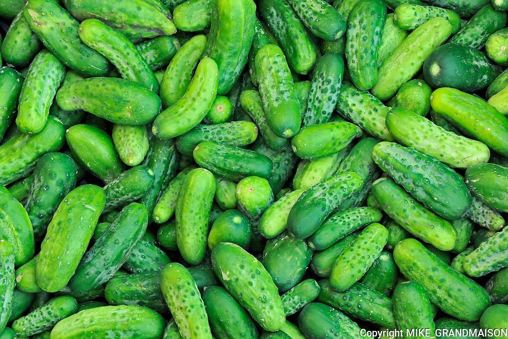 Market garden vegetables - cucumbers