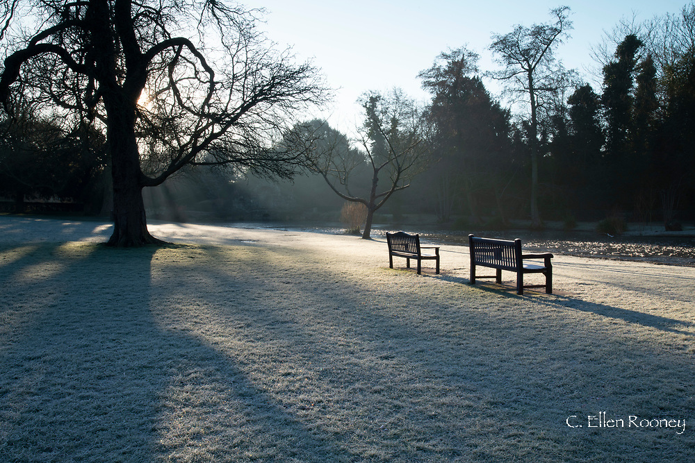 An expanse of frost covered lawn and garden benches on a February morning at Chiswick House, Chiswick, London, UK